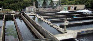 تصفیه استخر های ماهی سرد آبی