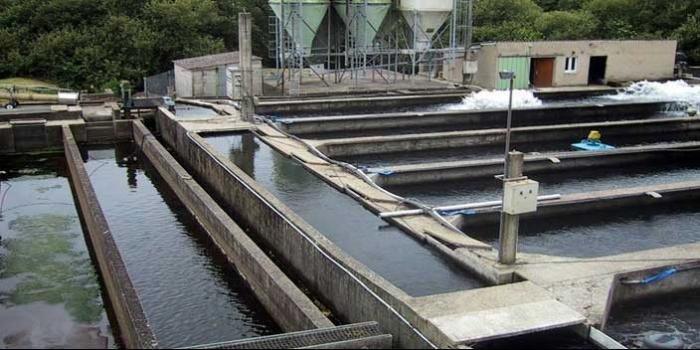 تصفیه آب در صنایع شیلات و پرورش ماهی